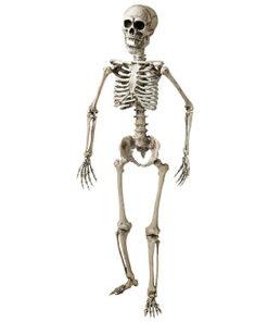 Halloween decoratie - Lier - schedel - geraamte - anatomie - beenderen - ware grote - piraten
